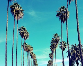 Palm Trees in Los Angeles, California, Palm Tree Lined Street Photo Print. Black and White, California Photography. Los Angeles Photography