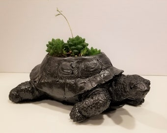 Concrete Turtle Planter