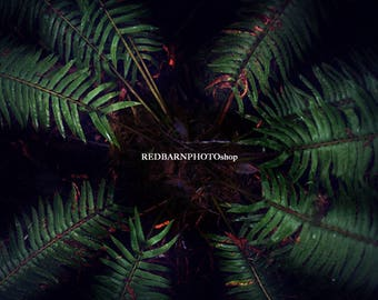 Forest Fern Digital Background For Creative Newborn Photography
