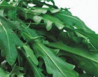 Eruca Sativa Salad Rocket Arugula Organic Vegetable  Pack 120 Seeds  Rucola Colewort