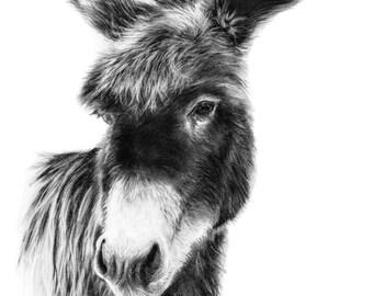 Donkey Drawing Charcoal Nursery Art Print Farm