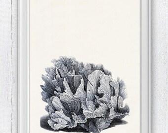 Blue coral sealife Illustration -Navy blue coral  - sea life print- Marine  sea life illustration A4 print SWC025