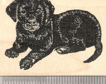 Black Labrador Retriever Rubber Stamp, Puppy Relaxing J26206 Wood Mounted