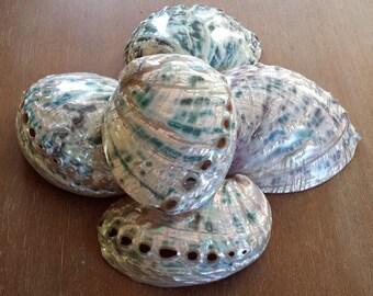 Abalone Shell, Sea Shell, Shells, Beach Decor, Nautical Decor, Coastal Decor, Beach House Decor, Beach Home, Polished Green Abalone Shell