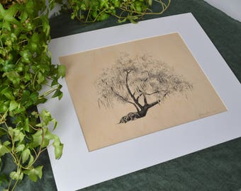 Tree Drawing on Wood Veneer - Pen and Ink Fine Art Print - 11x14 - Conquistador Oak Savannah, Georgia