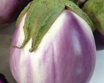Rosa Bianca Best Tasting Italian Eggplant Heirloom Variety Excellent Quality Fruit Rare Seeds Grown To Organic Standards