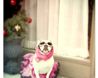 "Maximusbolo's ""Christmas Pitbull"" 4 5x7 Postcards and Envelopes"