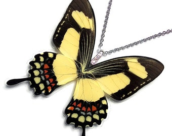 Real Butterfly Wing Necklace / Pendant (WHOLE Papilio Torquatus Butterfly - W042)
