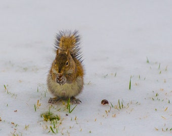 Squirrel in the Snow Blank Photo Greeting Card
