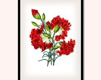 Carnation Print, Botanical Carnation Flowers, Botanical Art Print, Carnation Illustration, Flower Décor, F002