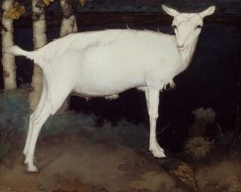 Jan Mankes: Young White Goat. Fine Art Print/Poster (00514)