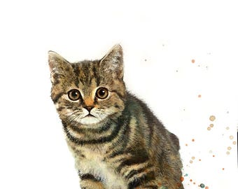 Illustration of a kitten print on paper drawing, mixed media animal painting.