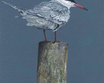 Common Tern Fine Art Painting Print