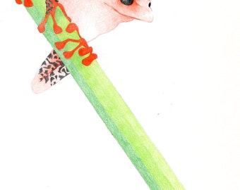 Pencil Frog Red/Green