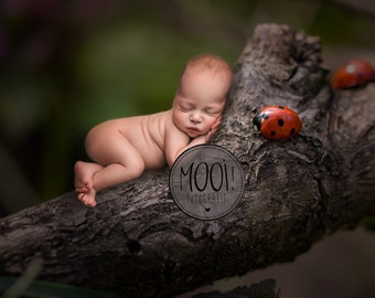Digital Prop for Newborn - Digital background - Newborn Photography - forest - tree - nature - branch - insect - ladybug - spring