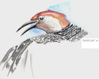 5 x 7 print Watercolor bird painting RedBellied Woodpecker Artist signed