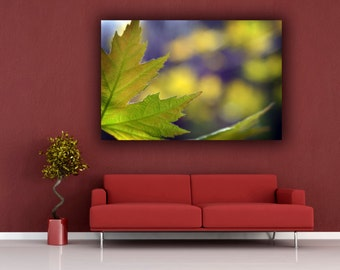 Green Leaf Photograph, Green & Yellow Photography, Spring Maple Leaf Photo Print, Horizontal Wall Art, Fine Art Nature Photography