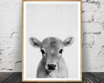 Calf Print, Baby Cow Farm Animal Wall Art, Nursery Decor, Large Printable Poster Digital Download, Farmhouse Decor, Photo Babies Room