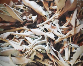 Loose Sacred White Sage Leaves and Branches - One Ounce - Purification - Herb - Pagan - Wicca - Magick - Cleansing