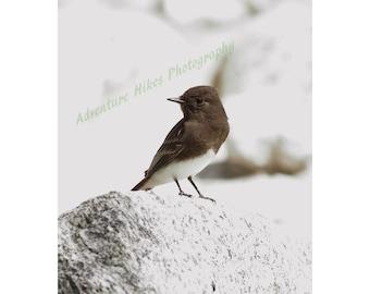 Nature photo print. Bird. Vertical print
