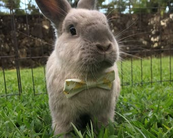 Banana bow for small animals, banana bow tie, bunny bow tie, rabbit bow, guinea pig bow, pet bow
