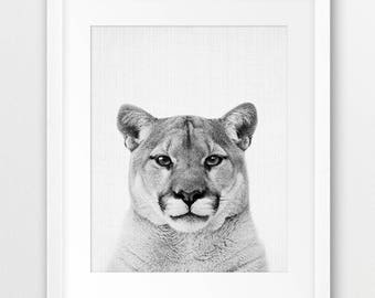 Cougar Print, Nursery Wall Art, Mountain Lion Print, Forest Animals, American Animals, Black White Photo, Nursery Decor, Kids Room Printable