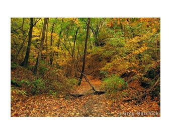 """Fine Art Color Landscape Photography of Starved Rock State Park in Illinois - """"Owl Canyon 2"""""""