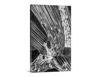 Black and White Cactus Art, Photography Print, Abstract Art, Saguaro Cactus Art, Arizona Desert Picture, Cactus Photography, Tucson Gift