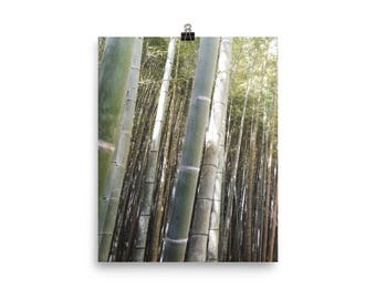 Bambus Wald Japan Foto Papier Poster
