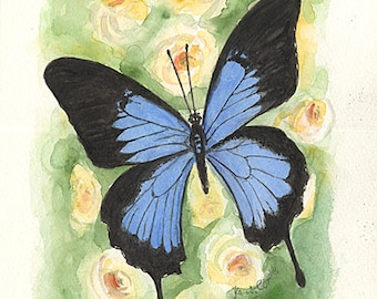 Ayale Peabodyig Butterfly