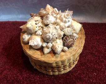 Basket with Seashells