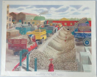 Vintage industrial poster, Sugar Beet at an English Factory, Original Macmillan Poster (Print)