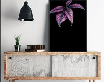 Pink Leaves on Black /White Background