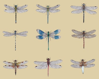 Dragonfly Studies A3 Art Print