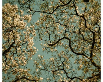 Nature Photography - Flower Photograph - Playing Favorites - Fine Art Photograph - Spring Magnolia Tree - Flower Art - Flower Print - Bock