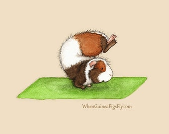 Guinea Pig Yoga Scorpion Pose - Yoguineas Collection Cute Guinea Pig Yoga Art Print