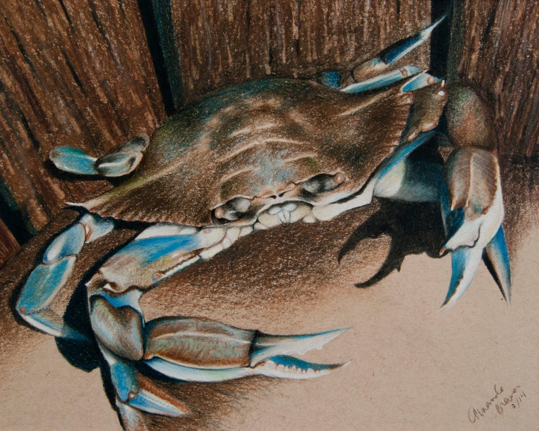Atractivo Colorear Cangrejo Azul Festooning - Dibujos Para Colorear ...