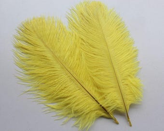 Ostrich feathers 15 / 20cm yellow chick 20pcs