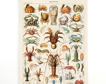 Pull Down Chart - Vintage Crustaceans Diagram Reproduction Print. Educational Chart by Adolphe Millot Lobsters Crabs Sea Life. CP262cv