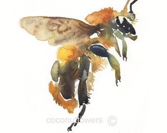 Bee, Watercolor Print,Insect Art, large size, 11x14 inches, Honey Bee,Art Print