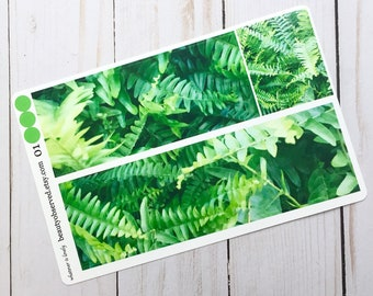 Fern planner stickers | fern photo stickers | full box planner stickers |  | vinyl matte stickers | green plant stickers