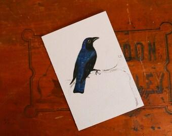 Dessin - Fine & original art - Drongo azuré au crayon de couleur
