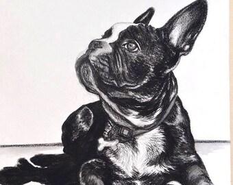 A1 Extra Large Custom Charcoal Pet Portrait