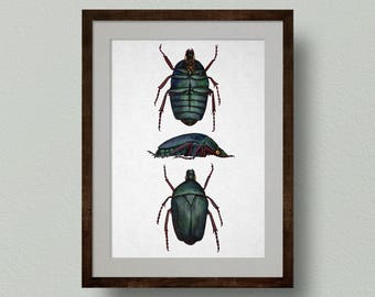 Rose Chafer Beetle Print from Original Watercolour Painting, Entomology Diagram, Scientific illustration showing multiple sides, Insect Art.