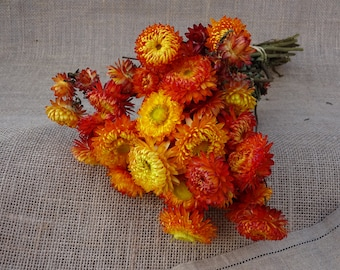 Bunch of dried  Helichrysum flowers