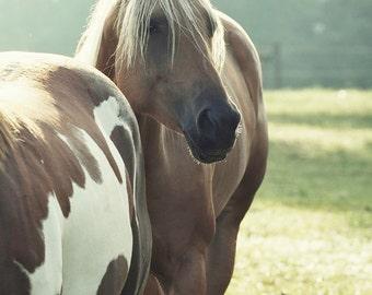 Horse Photography Equestrian Art