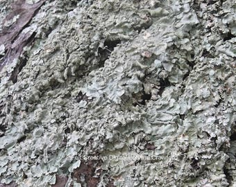 Lichen Nature Photography - Tree Photography Art Print *SUPPLIED WITHOUT FRAME*