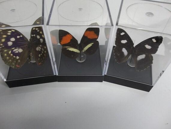 Assorted butterflies (tiny)