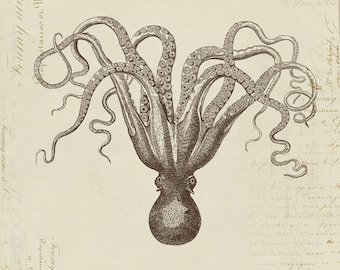 "Octopus ""Poulpe"" on French Ephemera Print 8x10 P299"