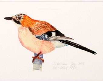 bird giclee print illustration archival art drawing orange black woodland eurasian jay scandinavian